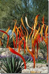 Glass in Desert Botanical Gardens