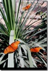 butterflys on the fan